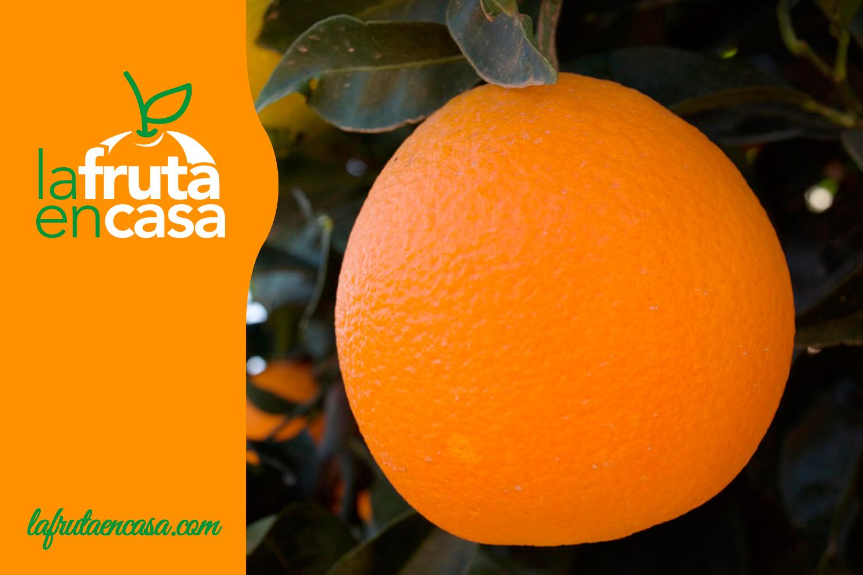 pronto al aceite de naranja